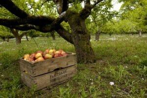 The Apple Farm Cahir