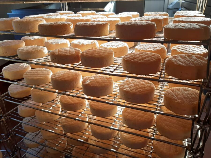 The History of Milleens Cheese