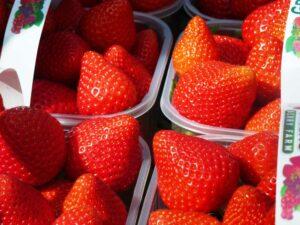 Irish Strawberries. Greens Berry Farm, Co. Wexford, Ireland