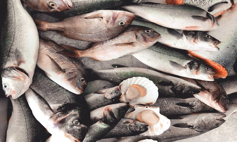 Renvyle's West Coast Seafood Chowder
