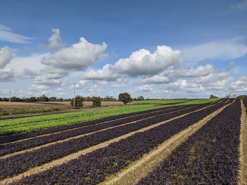 McCormack Family Farm Approved to the Good Food Ireland® Collection