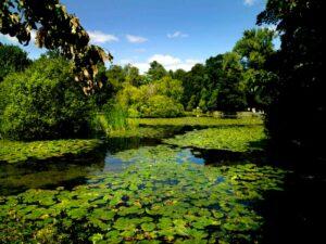 Altamont Gardens Lake
