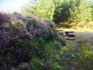 Sliabh Aughty Bee Hives