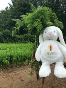 GFI Bunny