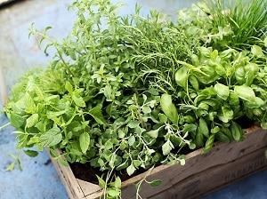 Herbs, Summer Gardening in Ireland
