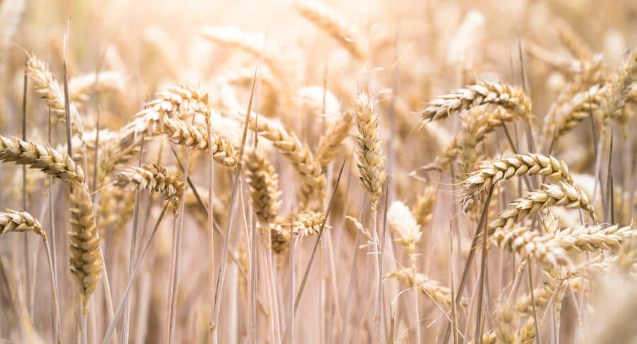The Road Less Travelled – Grain Farming